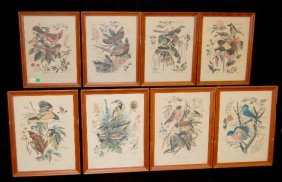 8 Bird Prints By Arthur Singer, Framed