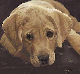 John Weiss - Best Loved Breeds: Yellow Labrador