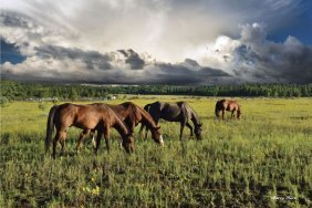 Barry Hart. Pammie's Pasture