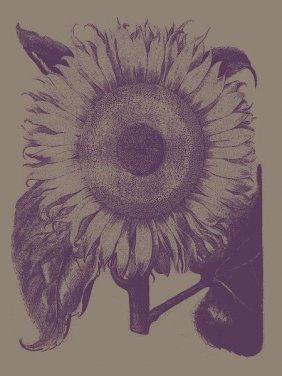 Botanical Series. Sunflower 14