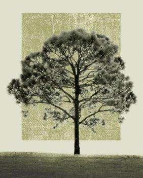 Harold Silverman. Nature's Shapes I