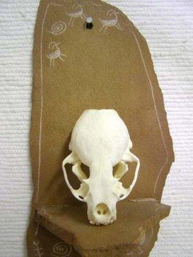 Animal Skull - Otter