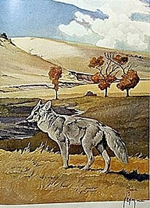 "Lithograph ""the Coyote"" By Artist Francis Lee Jaques"