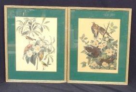 """(2) A.j. Audubon Prints: """"bachman's Warbler"""" And"""