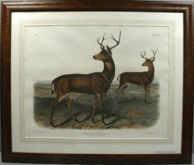 J.W. AUDUBON, BLACK TAIL DEER, HC LITHO, C. 1846