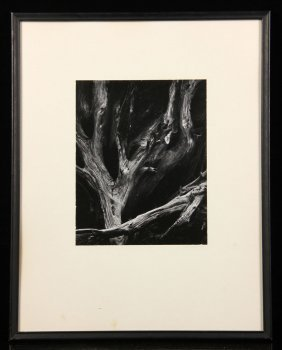 "Adams, ""sequoia Roots,"" Photograph"