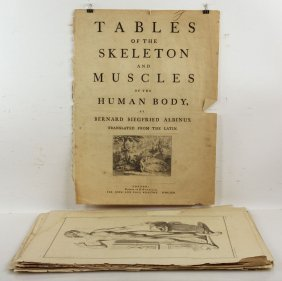 "18th C. Folio ""tables Of The Skeleton And Muscles Of"