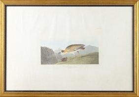 """John James Audubon (1785-1851), """"rocky Mountain"""