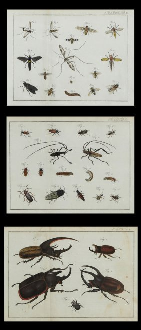 "German School, ""beetles,"" ""flying Insects,"" And ""small"