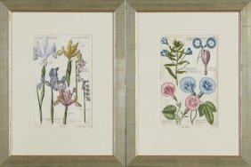 "Pierre Joseph Buchoz (1731-1807), ""irises,"" And"