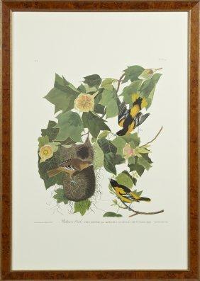 "John James Audubon (1785-1851), ""baltimore Oriole,"" No."