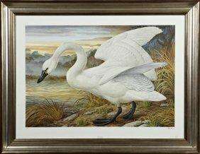 "Basil Ede (1931- ), ""tundra Swan,"" 20th C., Print,"