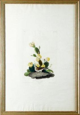 "John James Audubon (1785-1851), ""bay-winged Bunting,"""