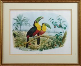 "John Gould, ""red Breasted Toucan,"" 20th C., Print,"