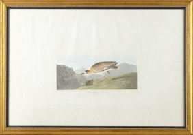 "John James Audubon (1785-1851), ""rocky Mountain"
