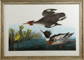 "John James Audubon (1785-1851), ""red-breasted"