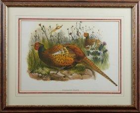 """John Gould, """"phasianus Shawi,"""" 20th C., Pheasant Print"""
