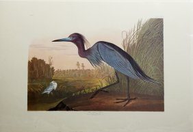 "John James Audubon (1785-1851), ""blue Crane Or Heron,"""