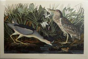 "John James Audubon (1785-1851), ""night Heron Or Qua"