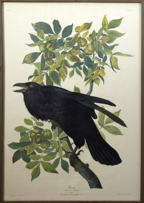 "John James Audubon (1785-1851), ""raven,"" No. 21, Plate"