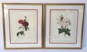 Pair Gold Framed Flower P.j. Redoute Prints Pair Gold