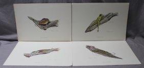4 Fishing Lure Ltd Edition Fishing Lure Lithos