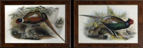 "J. Gould, ""phasianus Mongolicus,"" And ""phasianus"