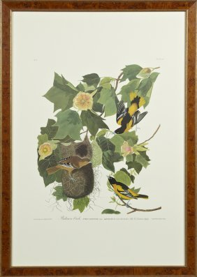 "John James Audubon (1785-1851), ""baltimore Oriole,"" No."