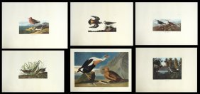 John James Audubon (1785-1851), Group Of Ten Prints,