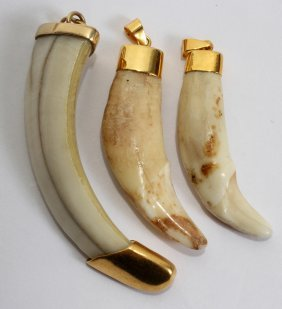 ANIMAL TEETH WITH 22KT GOLD CLAD MOUNTS, 3 PCS.