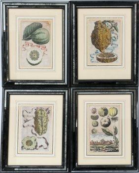 Hand-colored Engravings Citrus Fruits & Landscape
