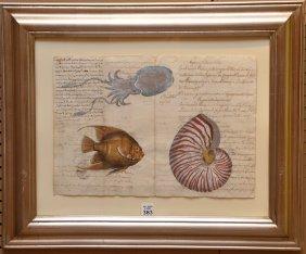 18th Century Italian Hand Decorated Manuscript, Squid,