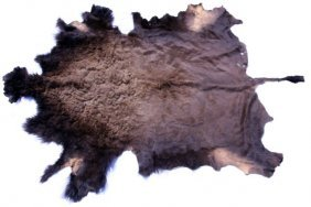 FULL BUFFALO HIDE TAXIDERMY