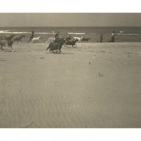 Anonymous Untitled (goats On The Beach)