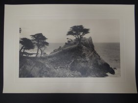 Black And White Photograph Of Cypress Trees Along The