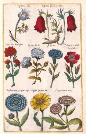 Three Botanical Engravings By Emanuel Sweerts