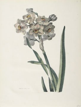 Daffodils By Gerard Van Spaendonck