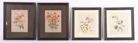 4 Botanical Prints Antique Handcolored Chromolith