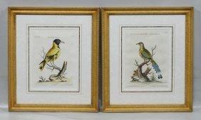 Pair Of Johann Michael Seligmann (german, 1720-1762),