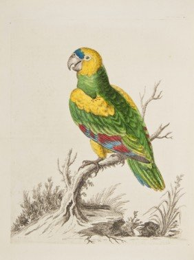 Edwards (George) A Natural History Of Birds