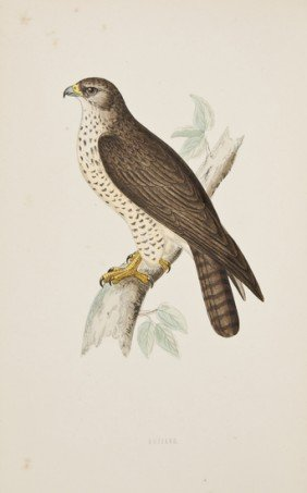 (Rev. Francis Orpen) A History Of British Birds, 6
