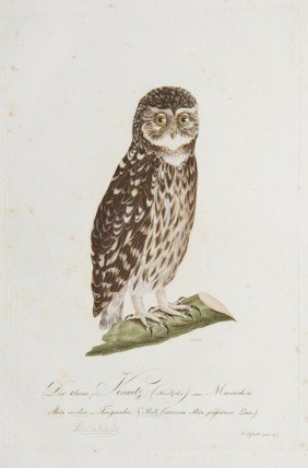 Susemihl (Johann Conrad) 6 Bird Plates From Teutsc