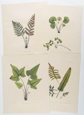 Plesch (arpad) - Mille Et Un Livres Botaniques De La