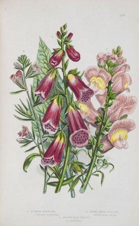 Pratt (anne) - The Flowering Plants, Grasses, Sedges