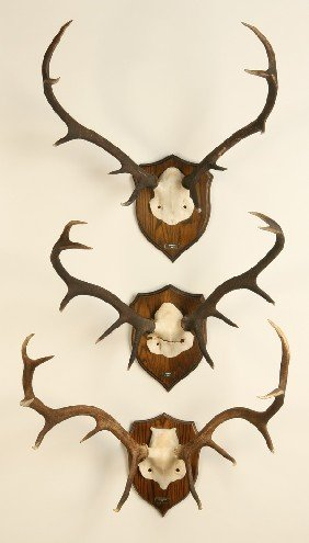 (3) Mounted Antler Racks
