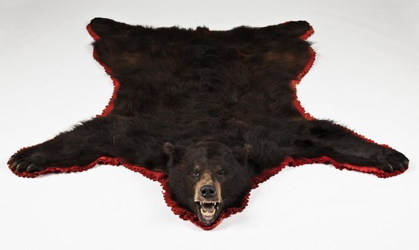 284: Vintage Brown Bear Skin Rug : Lot 284