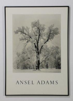 "(2) Ansel Admas Framed Photo Prints, 36""h"