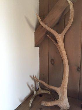Deer And Moose Antler