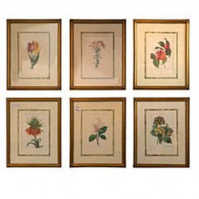Set Of Botanical Prints