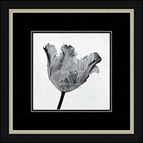 Parrot Tulip I By Artin